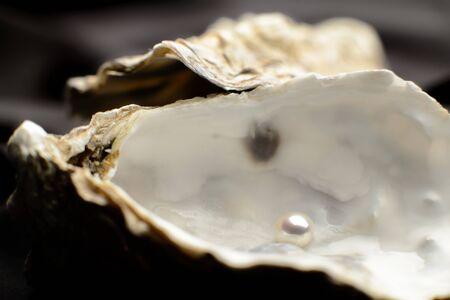 Pearl in an oyster, depth of field on black background Stok Fotoğraf