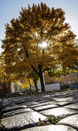 Autumn in the City photo
