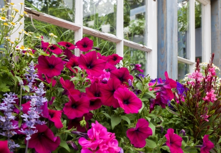 Flowers at the Window Stok Fotoğraf