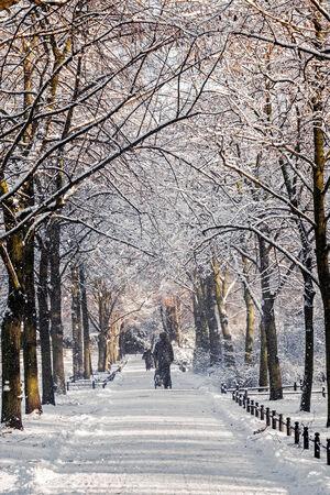 wintertime: Wintertime