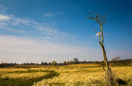 unaffected: Field and field Stock Photo