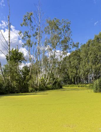 bluegrass: greener pond