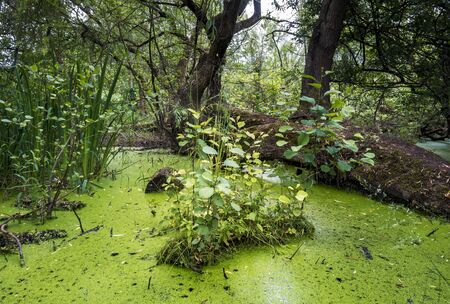 wetland conservation: BIOSTOP Stock Photo