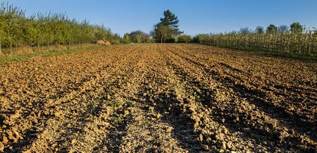 protection of arable land: a field from the farmer Stock Photo