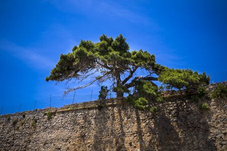 awry: a tree in a fortress Stock Photo