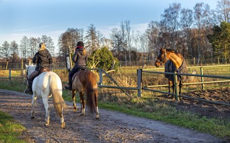 feld: Horses at the ride