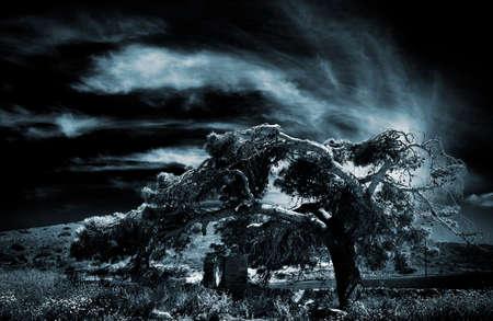 awry: Tree