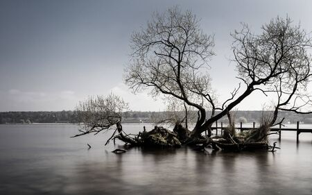 frhling: Tree in water
