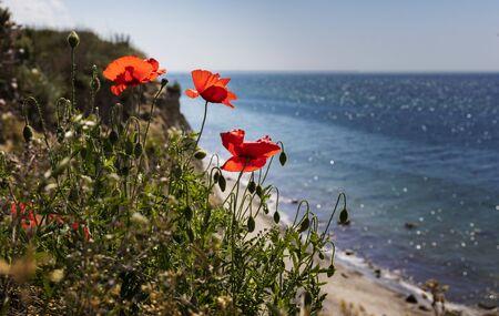 blte: poppy on the coast Stock Photo