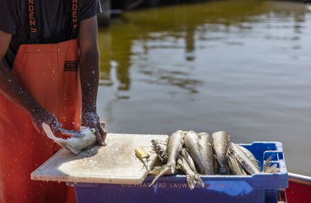 fished: Fischer sold his catch Stock Photo