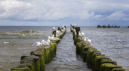 Seagulls at the Baltic Sea Stock Photo