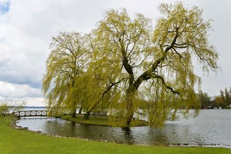 gartenanlage: Schwerine lake