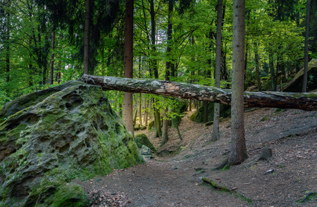 in the forest Standard-Bild - 104418668