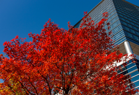 autumn Archivio Fotografico - 107538704