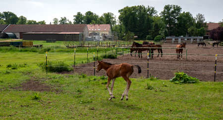 Horses and foals on a farm in Berlin Lübars
