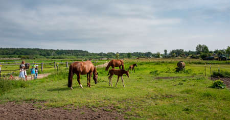 Horses on a meadow in Berlin Lübars