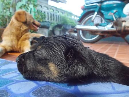 lovely: Lovely Dogs Stock Photo