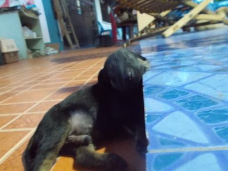 lovely: Lovely puppy Stock Photo