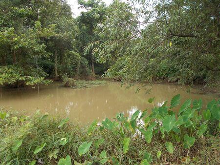forest stream: Forest  Stream.