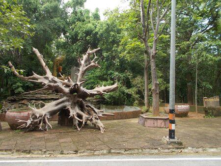 tree dead: Albero morto.