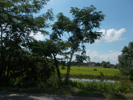 beside: Green nature beside the way.