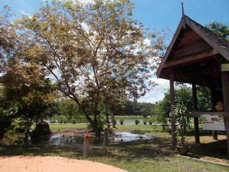 openair: Fresh natural park - open-air. Stock Photo