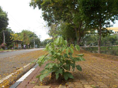 mahasarakham: Street and green nature at Mahasarakham, Thailand