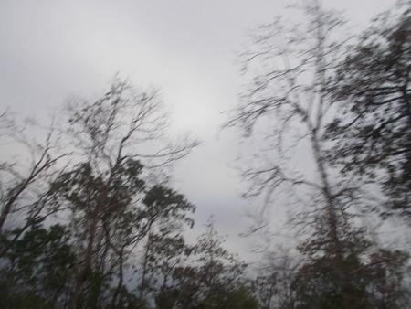nakhon: Branch and sky at Sakon Nakhon, Thailand