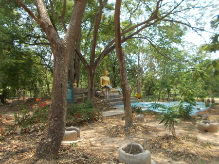 mahasarakham: Green forest at Wat Ku Kaeo, Mahasarakham, Thailand
