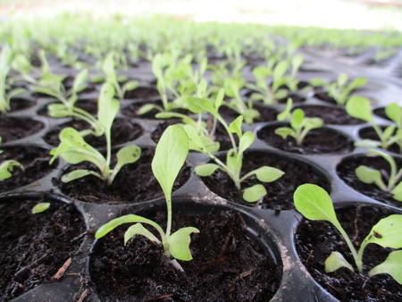and plot: Fresh Green organic vegetable plot at Sukhothai, Thailand