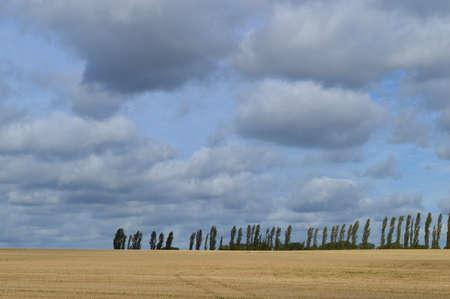 poplars: View across open fields Stock Photo