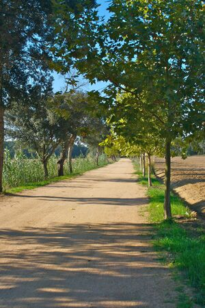Cycle Path in the countryside lined with trees and farmers fields