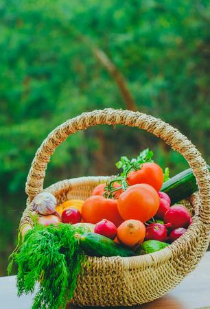 Fresh organic vegetables in basket. harvest concept Stock Photo
