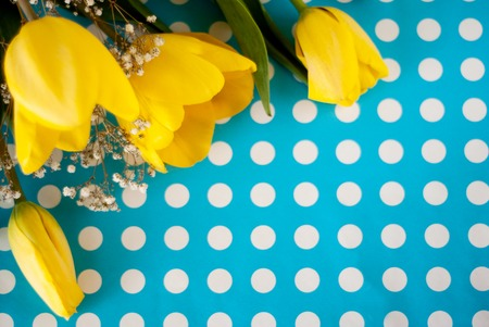 beautiful spring yellow tulip flowers on blue polka dot background