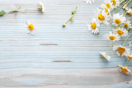 Bouquet of Freshly Picked Camomile Flowers Tied with Twine on Aged Plank Wood Blue Background. Beauty Skin Care Healthy Concept. Poster Banner Copy Space 스톡 콘텐츠