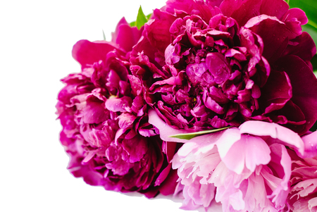 Purple and pink peony flowers bunch isolated on white background 스톡 콘텐츠 - 124936992