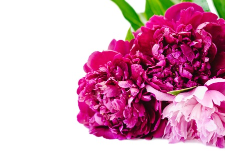 Purple and pink peony flowers bunch isolated on white background 스톡 콘텐츠