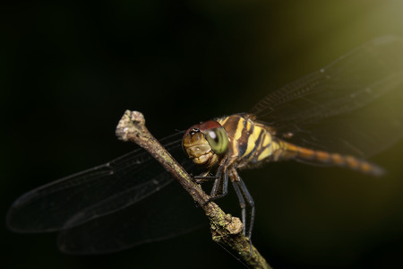 Dragonfly sitting on a branch Stock Photo