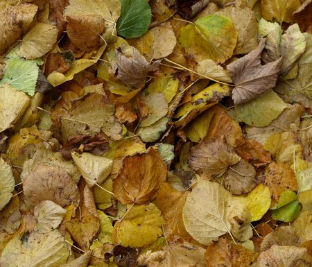 Background - fallen yellow autumn leaves on a damp day.