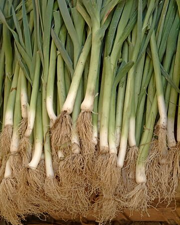 unwashed: Organic scallions or spring onions unwashed displayed at a market