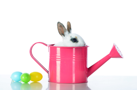 green white: Easter bunny whit eggs and pink watering cans.