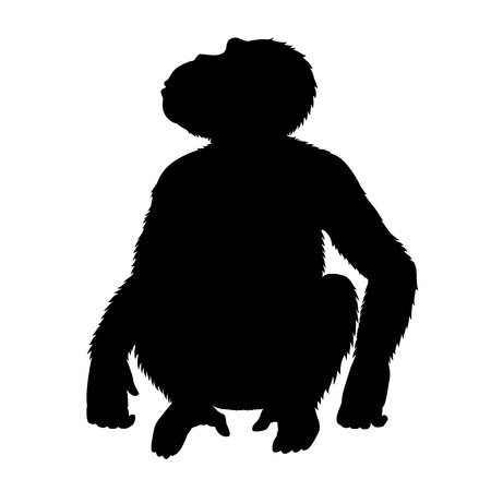 looking at view: Vector black silhouette of a chimpanzee, sitting and looking up. Front view. Isolated on white.