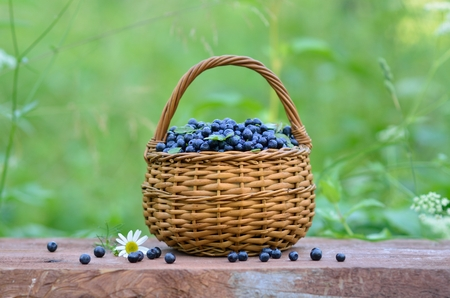 horizontal format: Small round wicker basket full of blueberries standing on a wooden surface. Green grass on the background. Horizontal format.