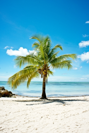 Exotic palm tree Stock Photo