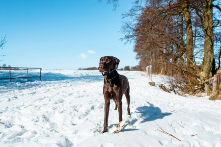 Dog in winter landscape covered with snow