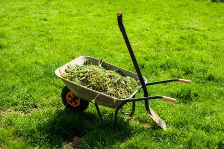 Brouette remplie de mauvaises herbes dans le jardin