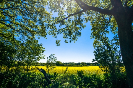 Forest clearing with a rapeseed field in the background Stock Photo