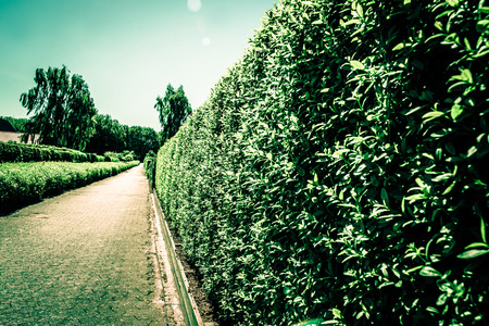 Village path with hedge on the right side Stock Photo