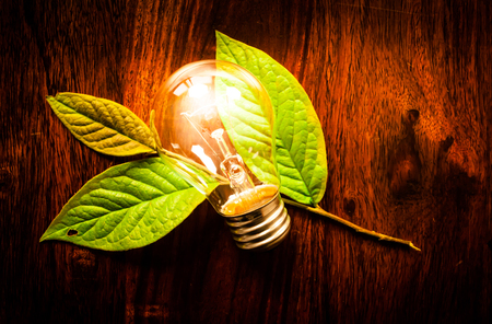Bright light bulb on green leafs at a wooden table