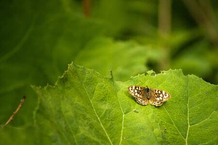 Image de fond avec un papillon sur une feuille
